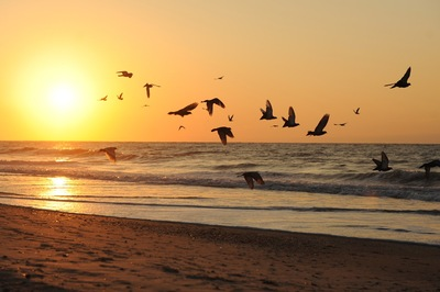 A beach sunset with birds